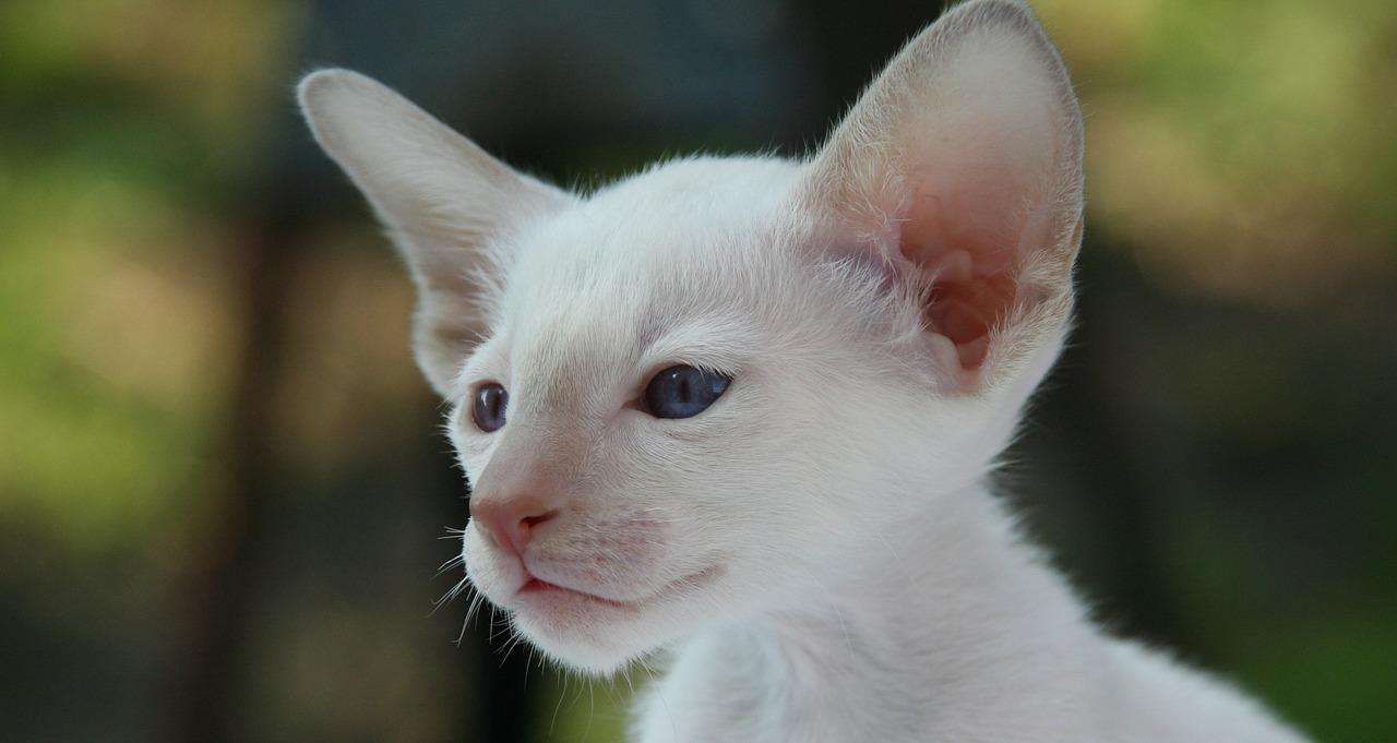 Pour bien accueillir votre chaton, pensez à faire un tour sur le site de Morin