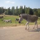 Thoiry, un parc zoologique à découvrir à moins d'une heure de Paris