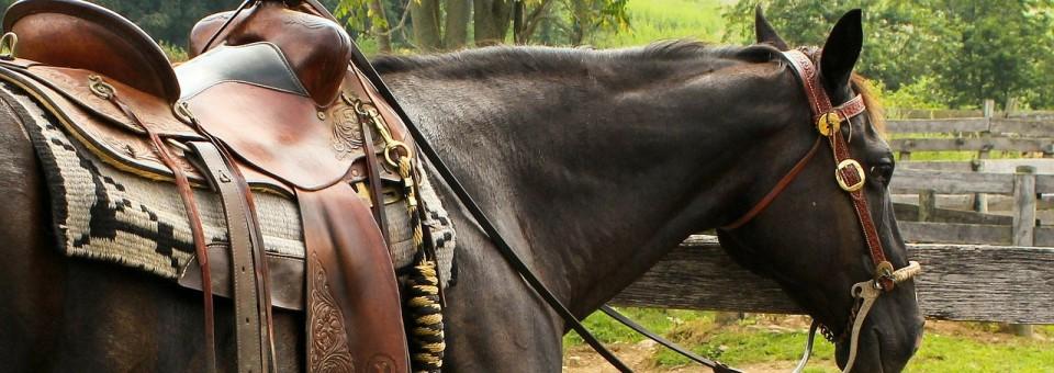 Qu'est-ce qu'il faut pour commencer à monter à cheval ?