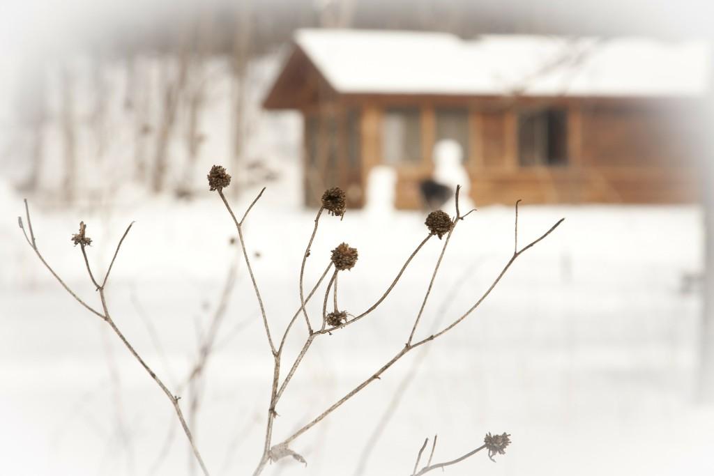 winter-173579_1920