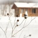 Entretenir son jardin en hiver