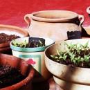 Pots de fleurs : Les matériaux adaptés pour nos plantes