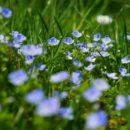 Comment limiter naturellement et efficacement la population des ravageurs de jardin ?
