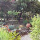 Côté jardin : les astuces pour redonner vie à votre jardin ombragé