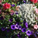Des plantes d'été pour un jardin féérique