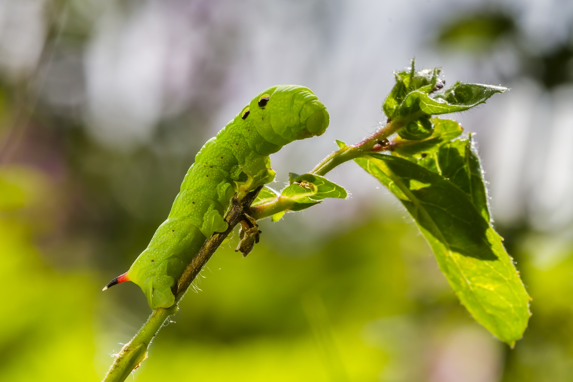Astuces pour se débarrasser des petites chenilles vertes