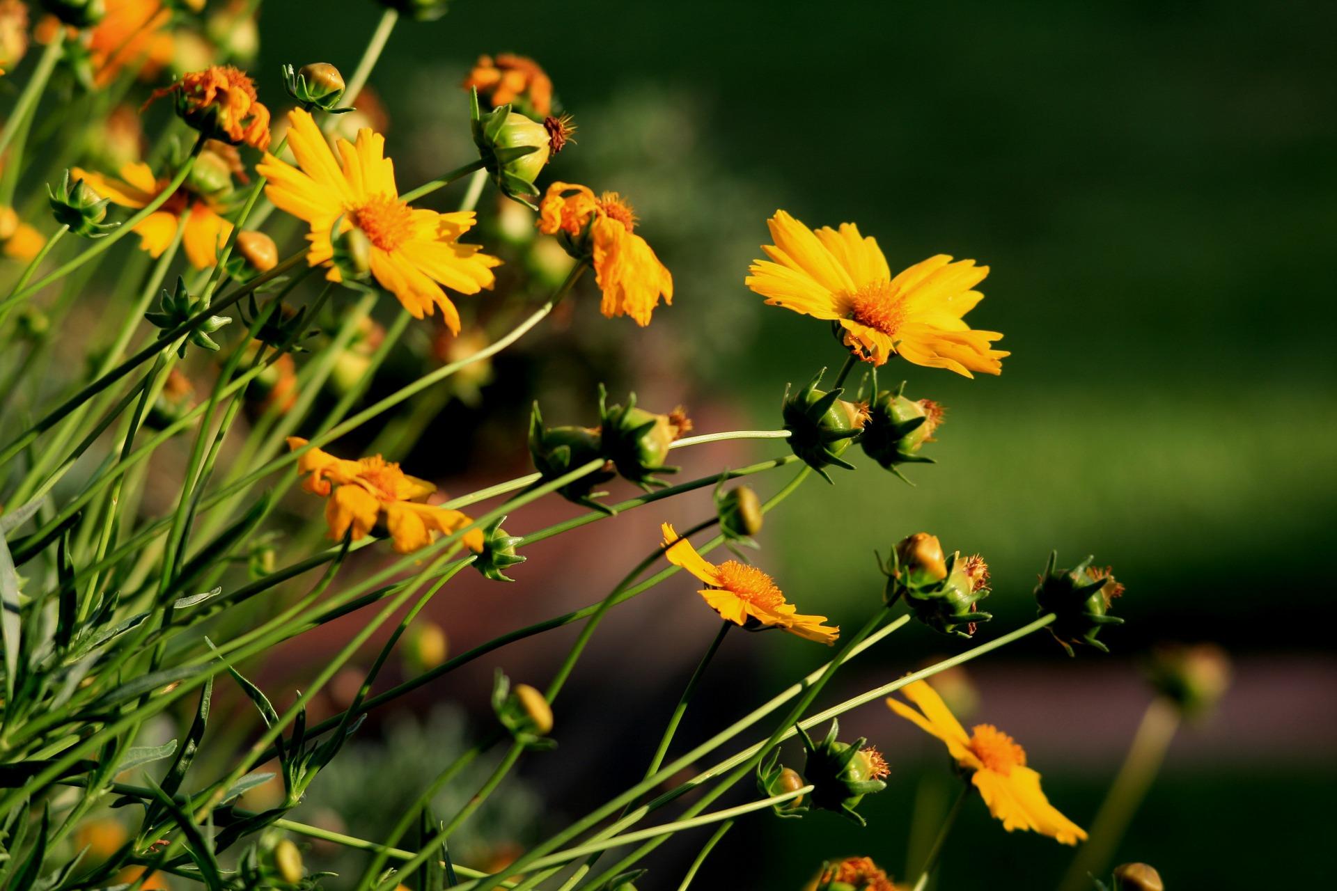 Comment rendre un jardin en longueur attrayant ?
