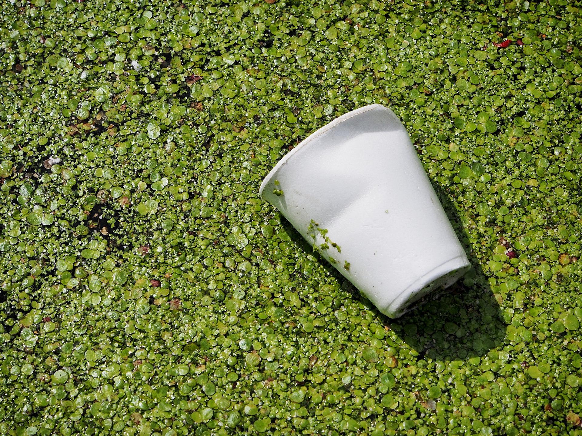 Le biodégradable, nouvelle avancée vers le respect de l'environnement ?