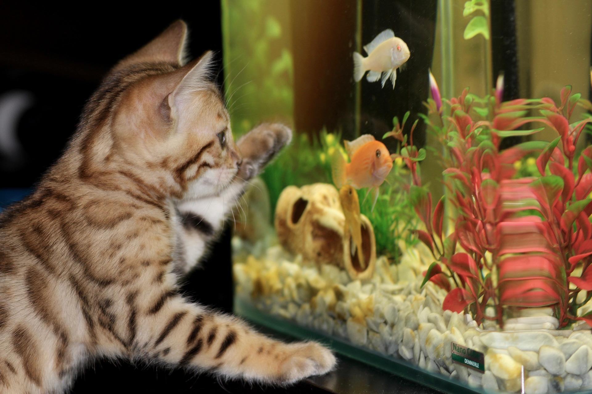Comment créer un aquarium fait maison ?