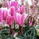 Jardin fleuri en plein hiver : que planter ?